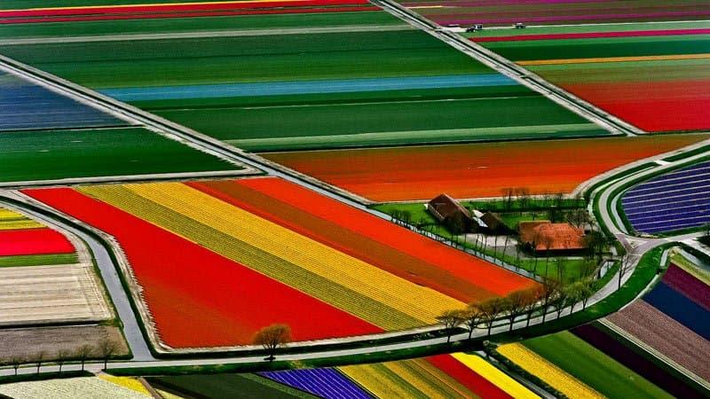 Tulpenfelder Niederlande